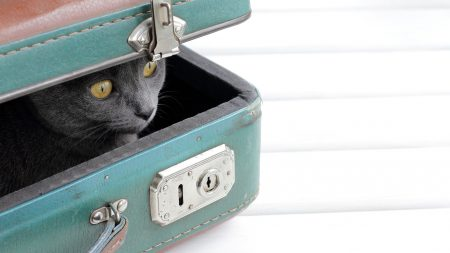 5 Tips for Moving House with Pets
